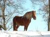 Mykonos ute på vintern.Ägare M.Kallin